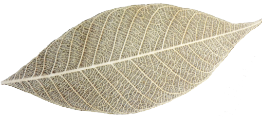 Wheat Color Skeleton Leaf