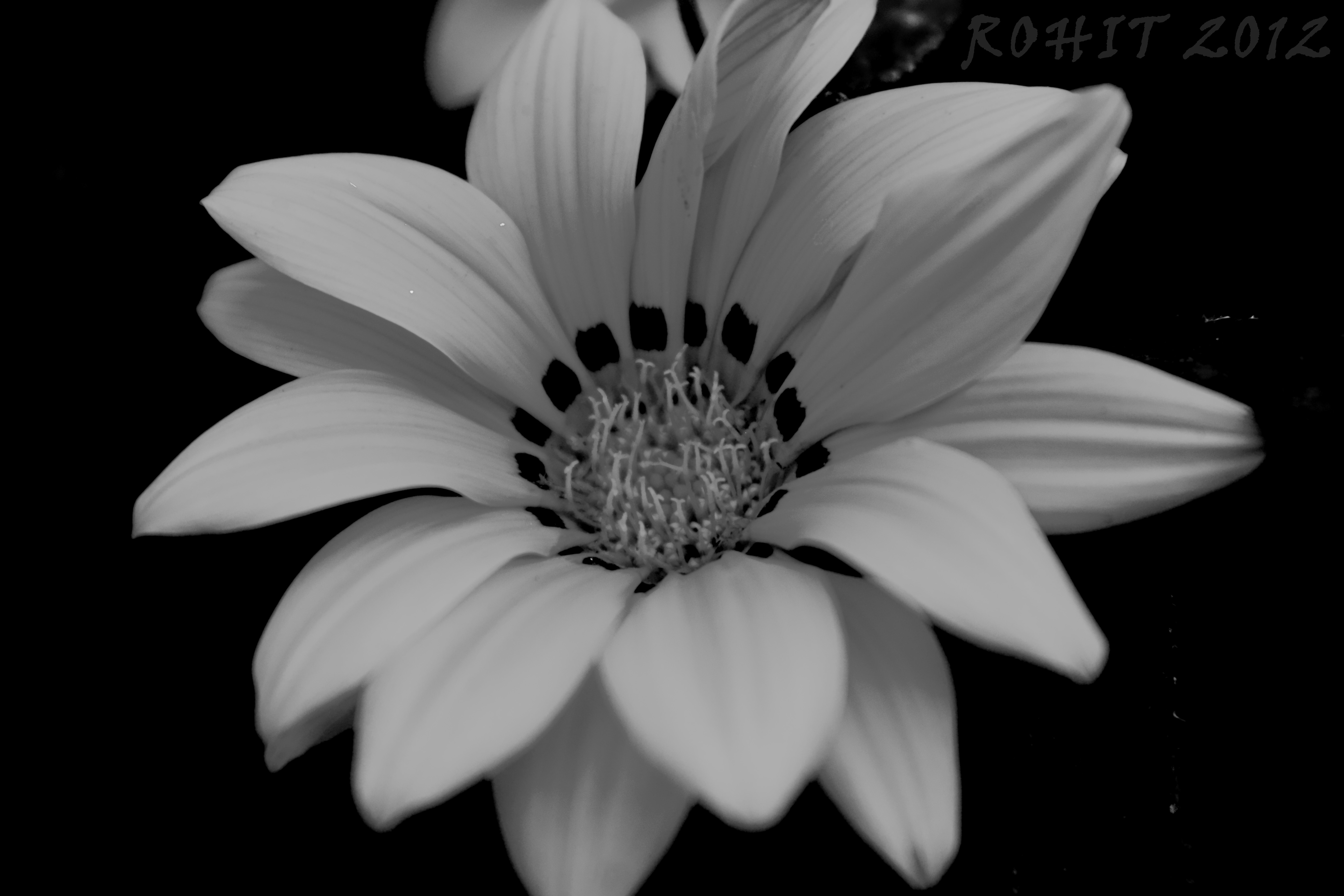 Black And White Flower in 4 Sections - mywholewall |Flower Pictures Black And White